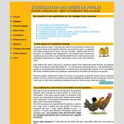 L'INCUBATION ARTIFICIELLE DES OEUFS DE POULES