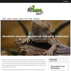 Bearded Dragon Incubator For Avid Breeders - PetGuidePro