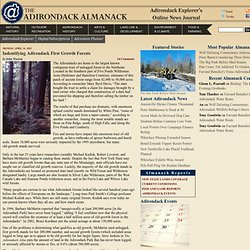 Adirondack Almanack: Indentifying Adirondack First Growth Forests