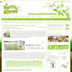 Plantes & Indésirables: Bye Bye les cochenilles ! : Vert-Citron