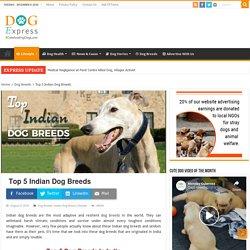 Top 5 Indian Dog Breeds List