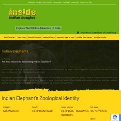 Indian Elephants - Meet The Indian Heritage Animal