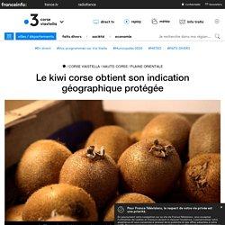 FRANCE 3 CORSE 15/04/20 Le kiwi corse obtient son indication géographique protégée