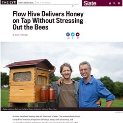 Flow Hive on Indiegogo delivers honey on tap, making beekeeping easier for humans and bees.