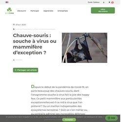 Chauve-souris, indispensable mammifère volant porteur de virus
