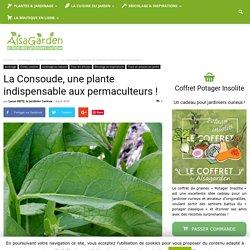 La Consoude, une plante indispensable aux permaculteurs