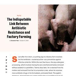 SENTIENTMEDIA 12/10/20 The Indisputable Link Between Antibiotic Resistance and Factory Farming