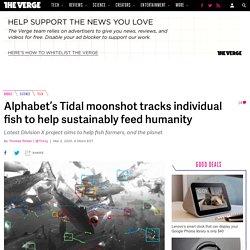 Alphabet's Tidal moonshot tracks individual fish to help sustainably feed humanity
