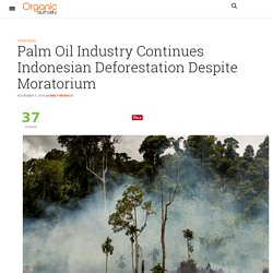 Palm Oil Industry Continues Indonesian Deforestation Despite Moratorium