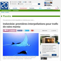 Indonésie: premières interpellations pour trafic de raies manta