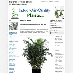 Best Air Filters for HomeBamboo Palm - Top Indoor Plants