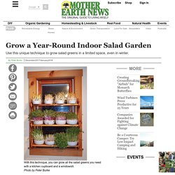 Grow a Year-Round Indoor Salad Garden - Organic Gardening