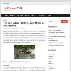 The Best Indoor Plants for Your Office in Philadelphia