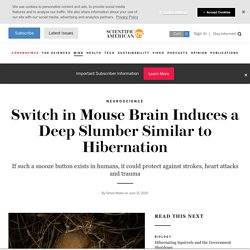 Switch in Mouse Brain Induces a Deep Slumber Similar to Hibernation