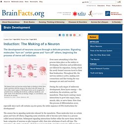 Induction: The Making of a Neuron