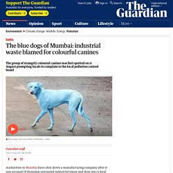 The blue dogs of Mumbai: industrial waste blamed for colourful canines