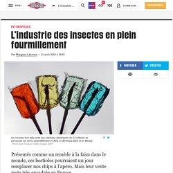 L'industrie des insectes en plein fourmillement