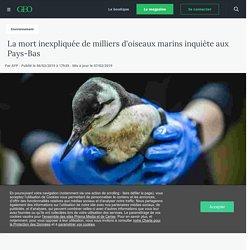La mort inexpliquée de milliers d'oiseaux marins inquiète aux Pays-Bas