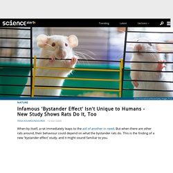 Infamous 'Bystander Effect' Isn't Unique to Humans - New Study Shows Rats Do It, Too