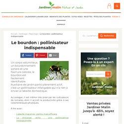 Le bourdon : infatigable butineur et pollinisateur au jardin