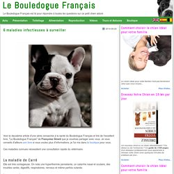 6 maladies infectieuses à surveiller-Le Bouledogue Français