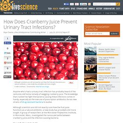 How Does Cranberry Juice Prevent Urinary Tract Infections?