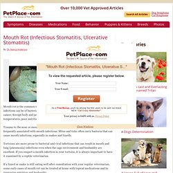 Mouth Rot (Infectious Stomatitis, Ulcerative Stomatitis)