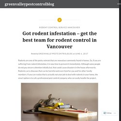 Got rodent infestation – get the best team for rodent control in Vancouver – greenvalleypestcontrolblog