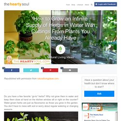 How to Grow an Infinite Supply of Herbs in Water With Cuttings From Plants You Already Have : The Hearty Soul