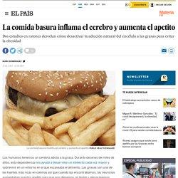 La comida basura inflama el cerebro y aumenta el apetito