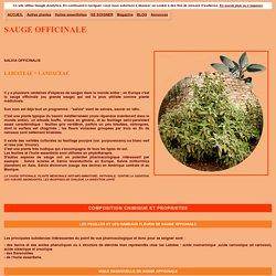 La SAUGE OFFICINALE, plante médicinale anti-inflammatoire, anti-virale, contre la sudation digestive et tonique, alimentation et phytothérapie