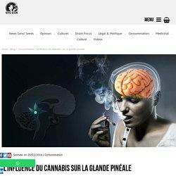 Sensi Seeds - L'influence du cannabis sur la glande pinéale