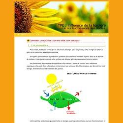 TPE : Influence de la lumière sur la croissance des plantes