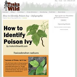 How to Identify Poison Ivy - Infographic - Outdoor Information Resource