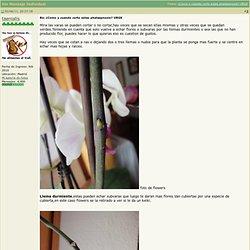 Foro de InfoJardín - Ver Mensaje Individual - ¿Como y cuando corto estas phalaepnosis? URGE