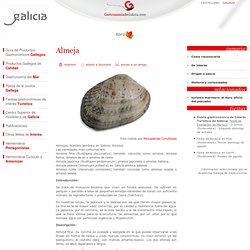 Información sobre la Almeja, Almejas, elaboración de las almejas, recetas con almejas, ameixa, almeja japonica, almeja fina, almeja babosa, almeja rubia,