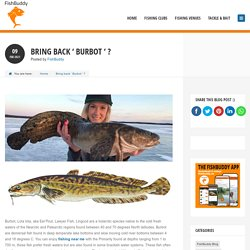 Check Out Information For Burbot Fish