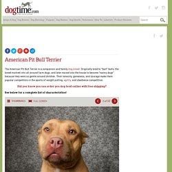 American Pit Bull Terrier Dog Breed Information, Pictures, Characteristics & Facts