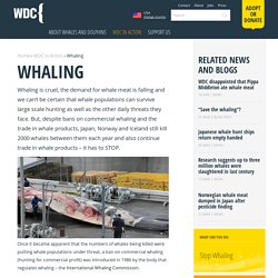 Whaling Information and Whale Hunting Facts - WDC, Whale and Dolphin Conservation