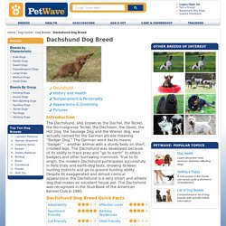 Information on Dachshunds