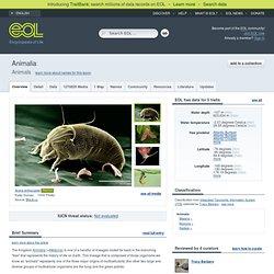 Animals (Animalia