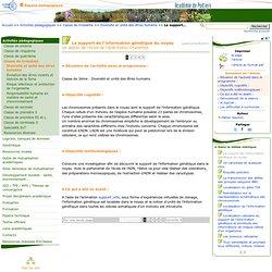 Le support de l'information génétique du noyau - Sciences de la vie et de la Terre