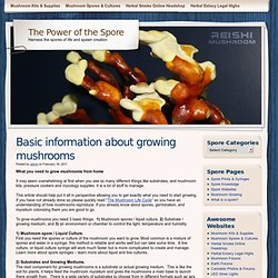 Basic information about growing mushrooms | The Power of the Spore