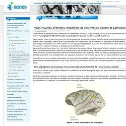 Voies visuelles afférentes, traitement de l'information visuelle et pathologies