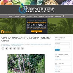 Companion Planting Information and Chart - The Permaculture Research Institute