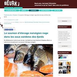 Le saumon d'élevage norvégien nage dans les eaux sombres des fjords