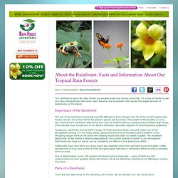 About the Rainforest - Information and Facts on Tropical Rainforests, Save the Rain Forest