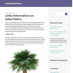 Little Information on Sabal Palms