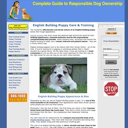 English Bulldog Puppy Information & House Training