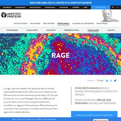 Rage : informations et traitements - Institut Pasteur